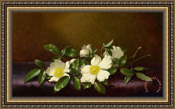 Martin Johnson Heade Cherokee Roses on a Purple Cloth Framed Print