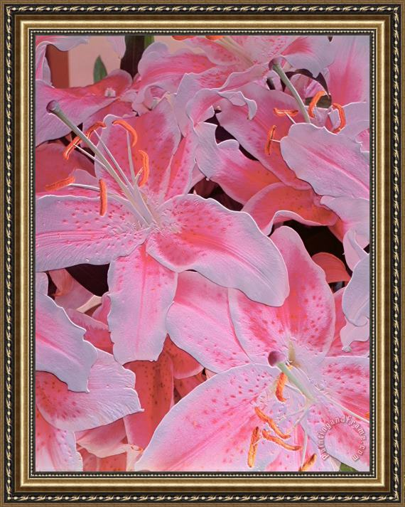Norman Hollands Tiger Lily Relief Framed Print