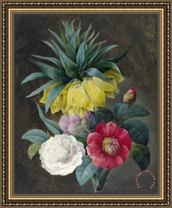 Pierre Joseph Redoute Four Peonies And a Crown Imperial Framed Painting