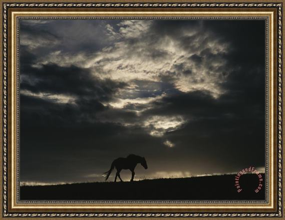 Raymond Gehman A Wild Horse Is Silhouetted Under Ominous Storm Clouds Framed Print