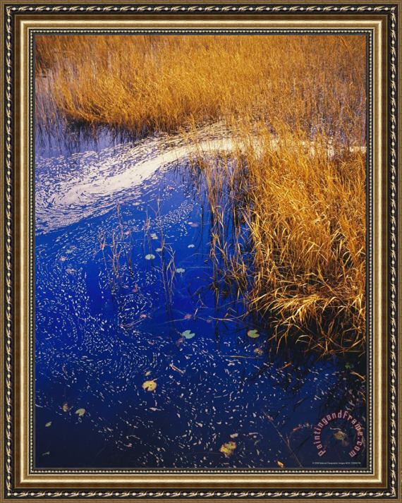 Raymond Gehman Water Lilies Wind Whipped Foam And Wire Grass at The Lakes Edge Near Lake Waccamaw Framed Print