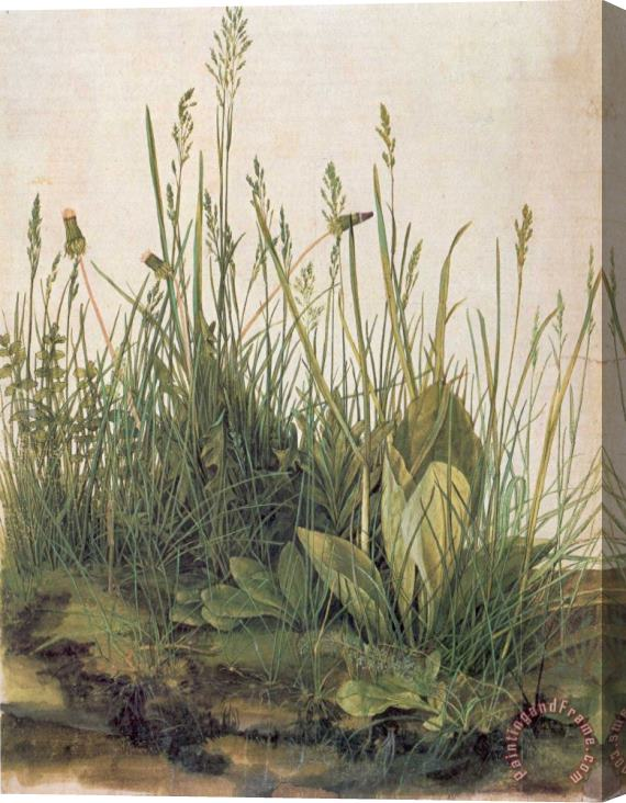 Albrecht Durer Great Piece Of Turf Stretched Canvas Print / Canvas Art