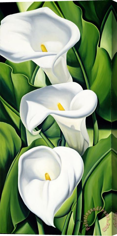 Catherine Abel Lilies Stretched Canvas Print / Canvas Art