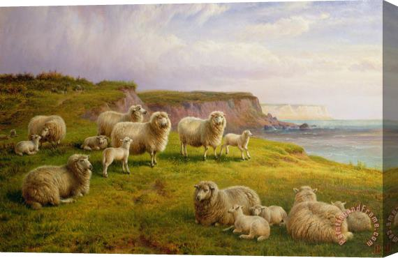 Charles Jones Sheep On A Dorset Coast Stretched Canvas Print / Canvas Art