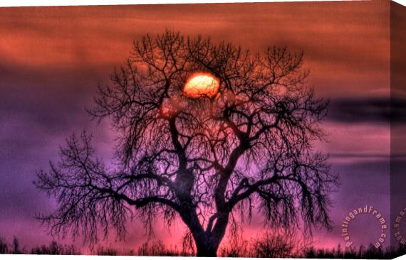 Collection 14 Sunrise Through The Foggy Tree Stretched Canvas Print / Canvas Art