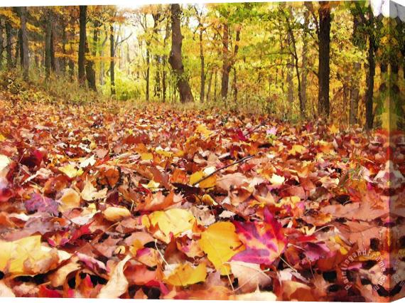 Collection 8 Leaf covered trail Stretched Canvas Print / Canvas Art