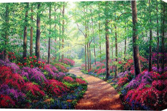 Collection Woodland Walk Stretched Canvas Print / Canvas Art