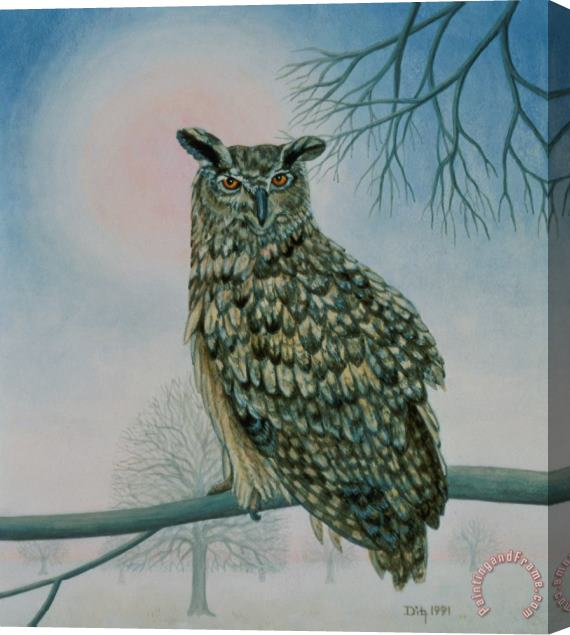 Ditz Winter Owl Stretched Canvas Print / Canvas Art