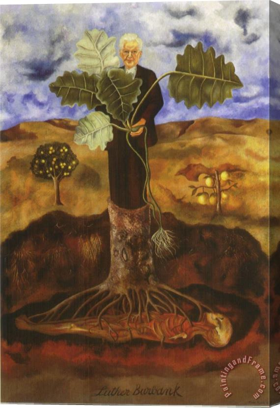 Frida Kahlo Portrait of Luther Burbank 1931 Stretched Canvas Print / Canvas Art