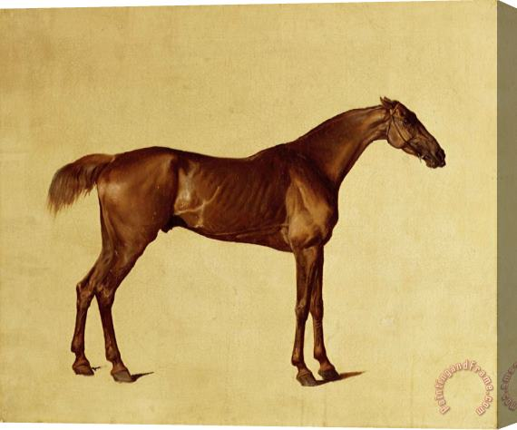 George Stubbs Rufus Stretched Canvas Print / Canvas Art