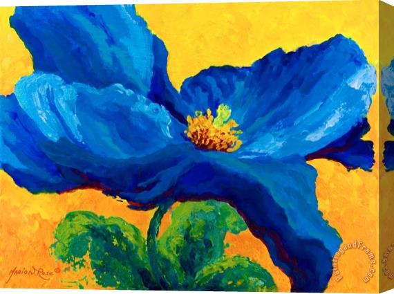 Marion Rose Blue Poppy Stretched Canvas Painting / Canvas Art