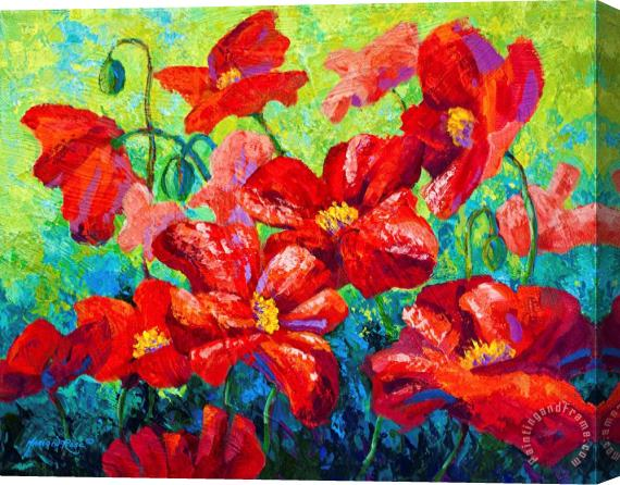 Marion Rose Field Of Red Poppies II Stretched Canvas Print / Canvas Art