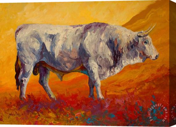Marion Rose White Bull Stretched Canvas Print / Canvas Art