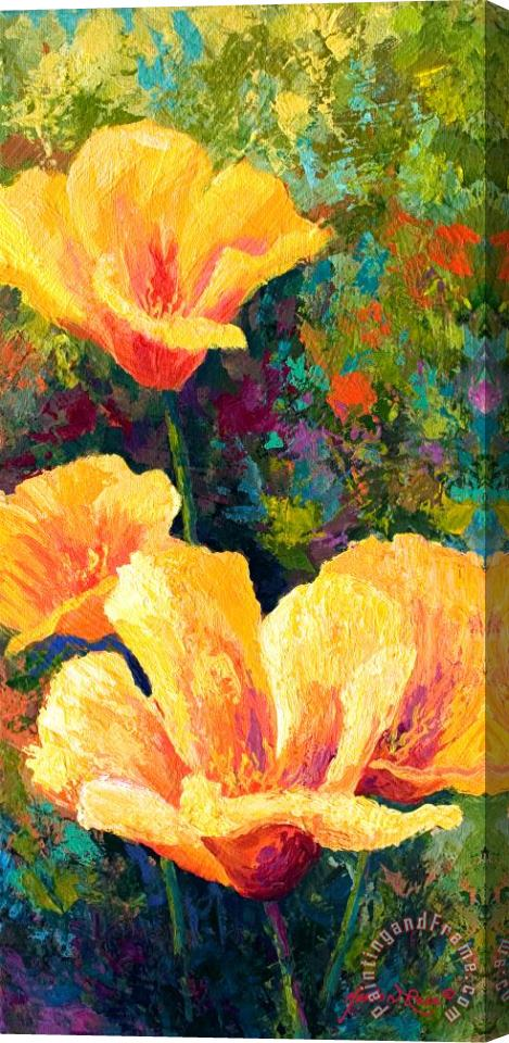 Marion Rose Yellow Field poppies Stretched Canvas Painting / Canvas Art