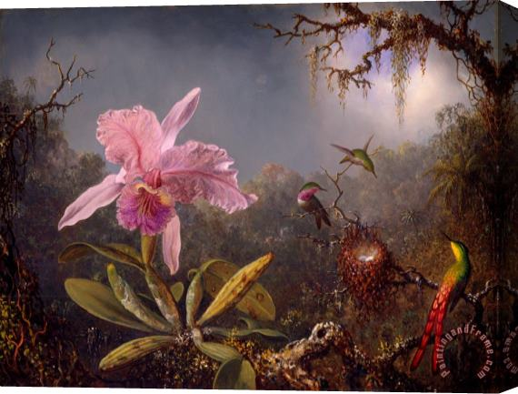 Martin Johnson Heade Cattleya Orchid And Three Hummingbirds Stretched Canvas Print / Canvas Art