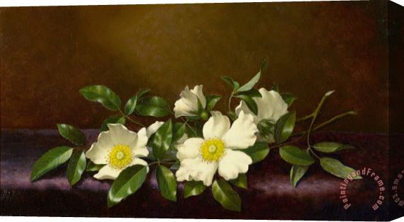 Martin Johnson Heade Cherokee Roses on a Purple Cloth Stretched Canvas Print / Canvas Art