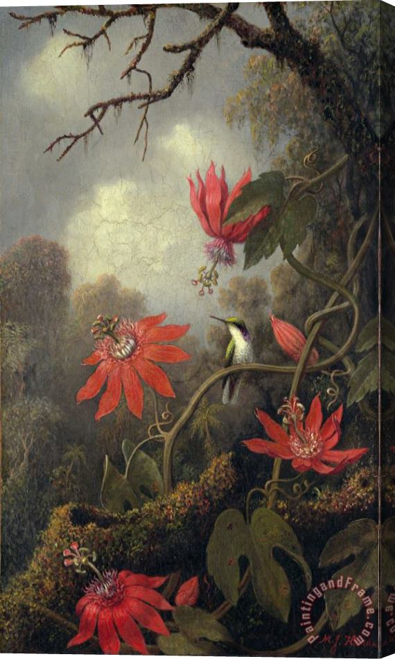 Martin Johnson Heade hummingbird and passion flowers Stretched Canvas Print / Canvas Art
