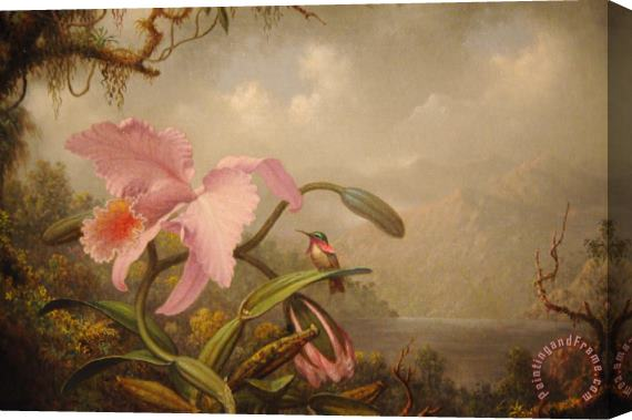 Martin Johnson Heade Orchid And Hummingbird Stretched Canvas Print / Canvas Art