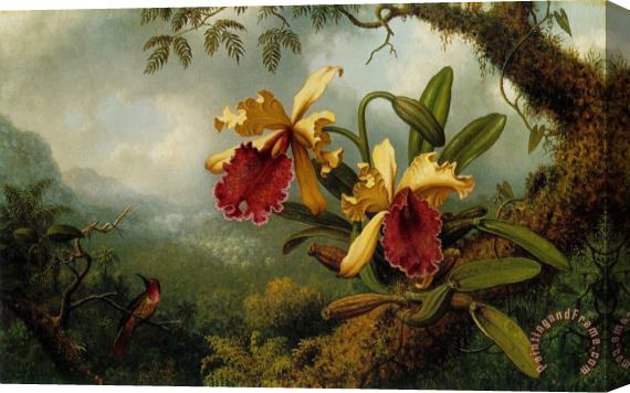 Martin Johnson Heade Orchids And Hummingbird Stretched Canvas Print / Canvas Art
