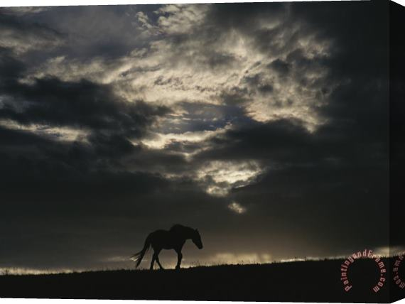 Raymond Gehman A Wild Horse Is Silhouetted Under Ominous Storm Clouds Stretched Canvas Print / Canvas Art