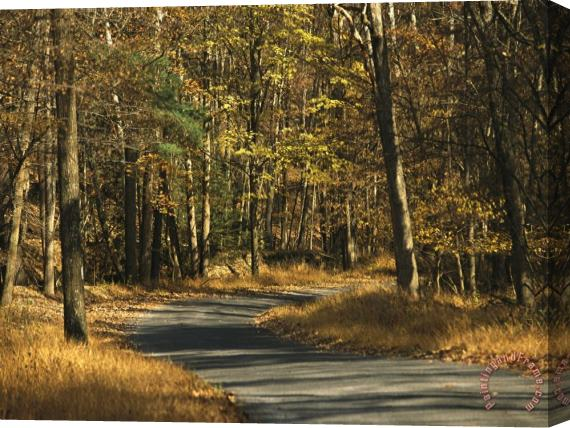 Raymond Gehman Forest Service Road Cuts Through George Washington National Forest Stretched Canvas Print / Canvas Art