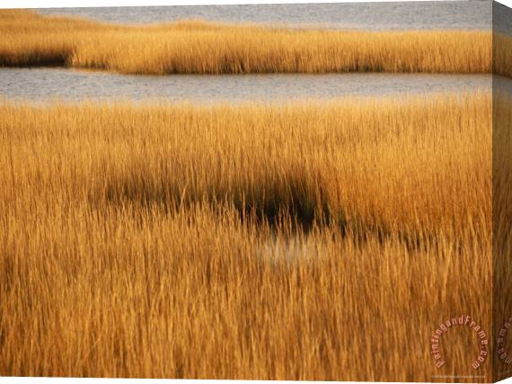 Raymond Gehman Salt Marsh with Cordgrass at Toms Cove on The Atlantic Ocean Stretched Canvas Print / Canvas Art