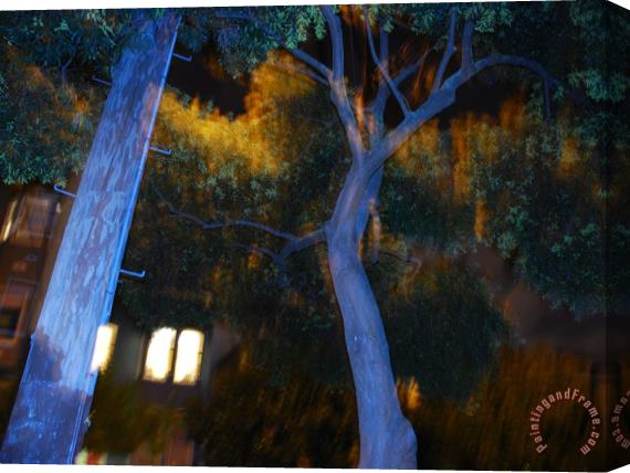 Raymond Gehman Telephone Pole And Tree Along a City Street at Night in San Francisco Stretched Canvas Print / Canvas Art