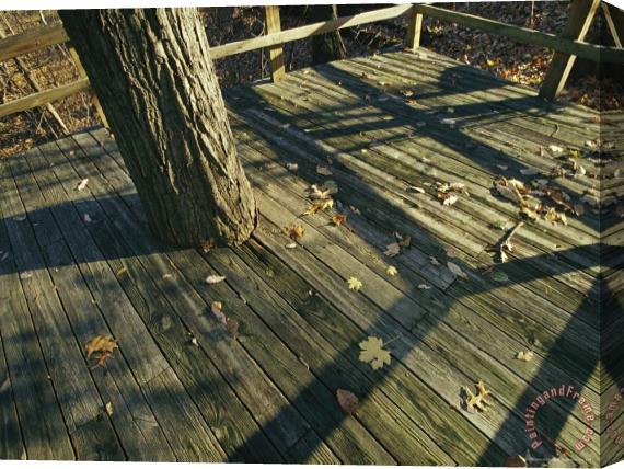 Raymond Gehman Wooden Observation Deck with Tree Trunk at The Nature Center Stretched Canvas Print / Canvas Art