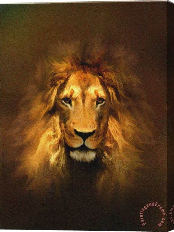 Robert Foster Golden King Stretched Canvas Print / Canvas Art