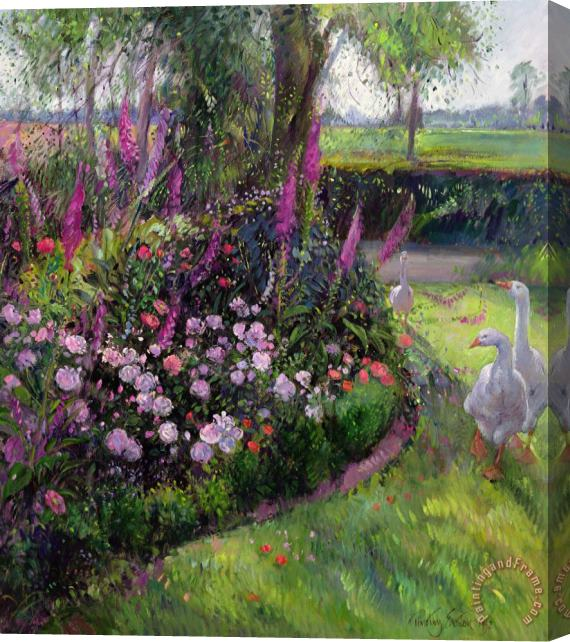Timothy Easton Rose Bed and Geese Stretched Canvas Print / Canvas Art