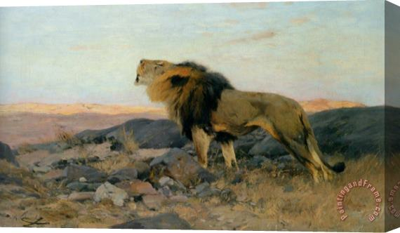 Wilhelm Kuhnert Brullender Lowe in Steiniger Steppe Stretched Canvas Painting / Canvas Art