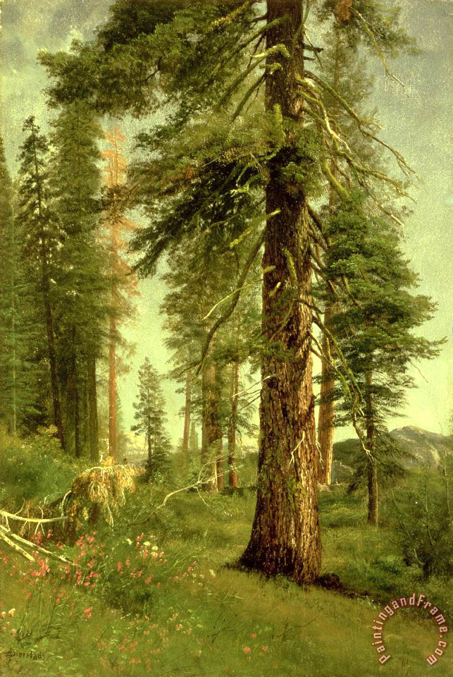 California Redwoods painting - Albert Bierstadt California Redwoods Art Print