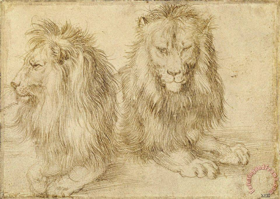 Two Seated Lions painting - Albrecht Durer Two Seated Lions Art Print