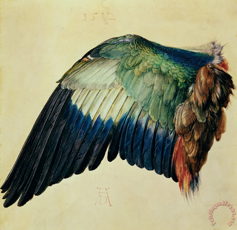 Wing of a Blue Roller painting - Albrecht Durer Wing of a Blue Roller Art Print