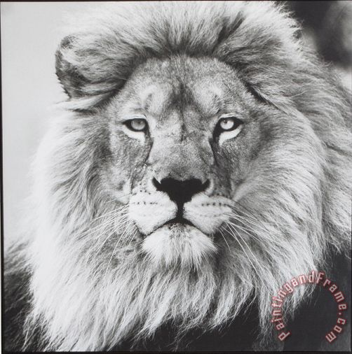 ausue Lion 5 Art Painting
