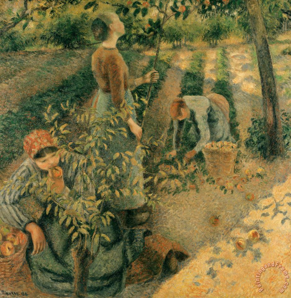 The Apple Pickers painting - Camille Pissarro The Apple Pickers Art Print