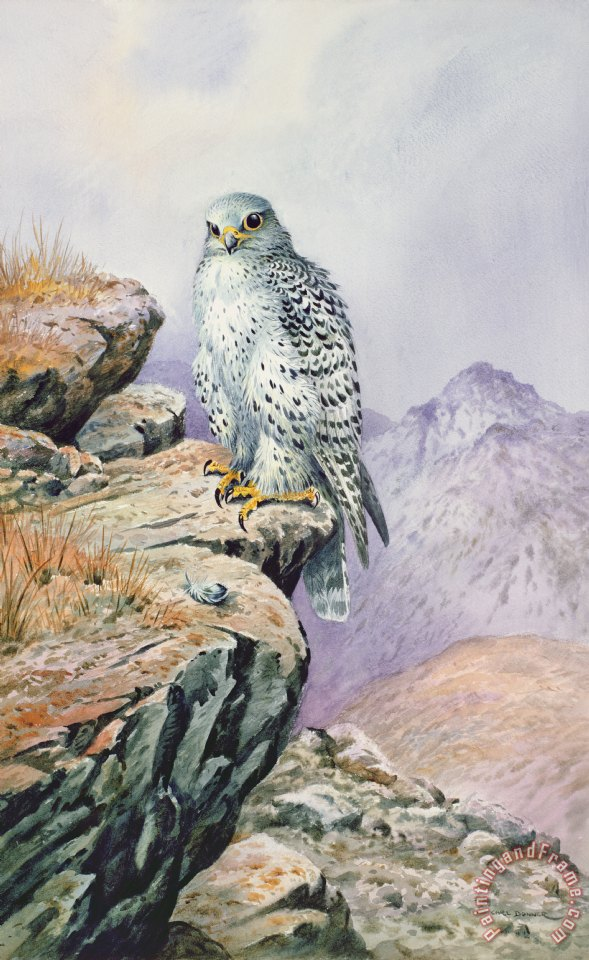 Carl Donner Gyrfalcon painting - Gyrfalcon print for sale