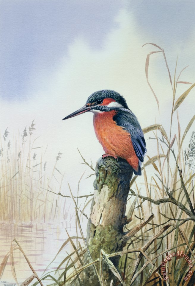 Kingfisher painting - Carl Donner Kingfisher Art Print