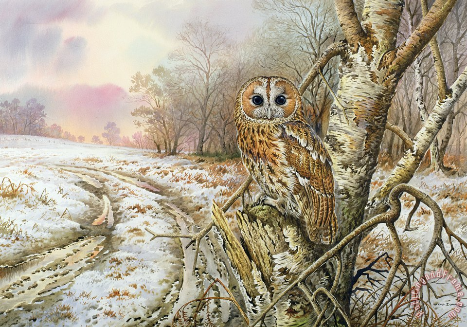 Tawny Owl painting - Carl Donner Tawny Owl Art Print