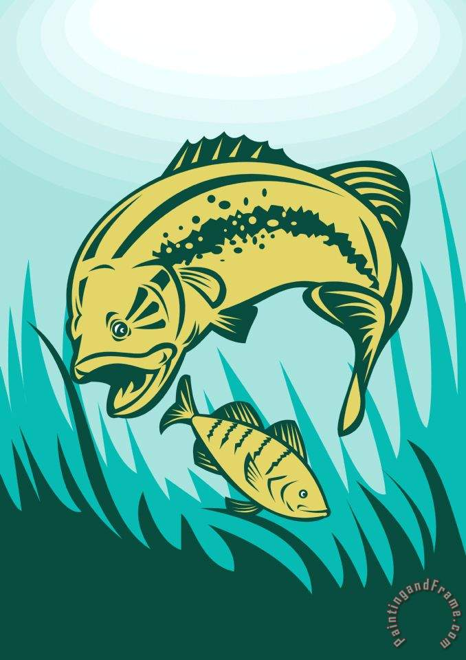 Collection 10 Largemouth Bass Preying On Perch Fish Art Painting