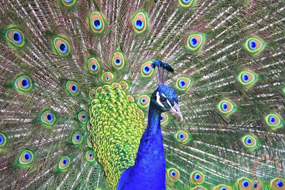 12 dream best peacock blue paint color portrait homes for Best peacock blue paint color