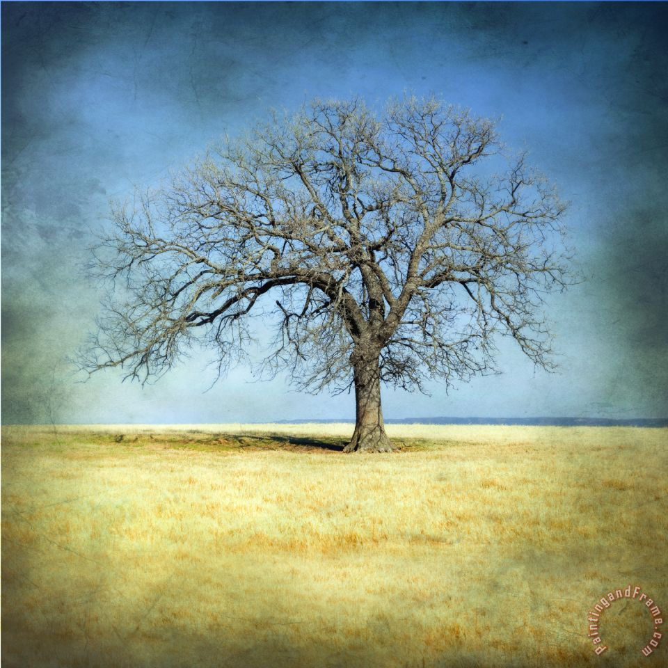 Collection 6 Lone Tree Painting Lone Tree Print For Sale