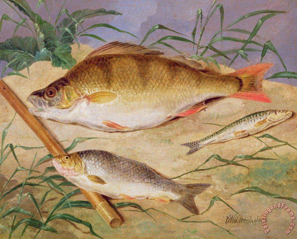 D wolstenholme an angler 39 s catch of coarse fish painting for Angler fish for sale
