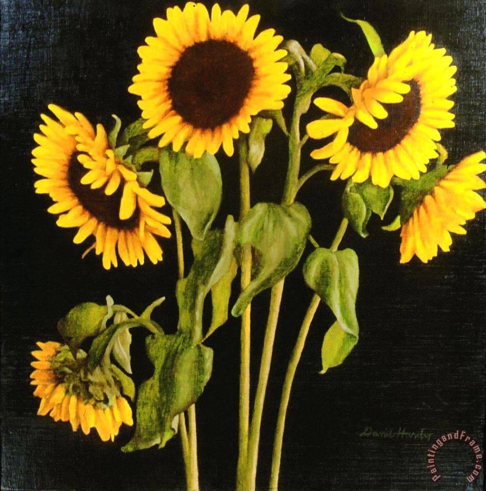 Beach Sunflower Sale