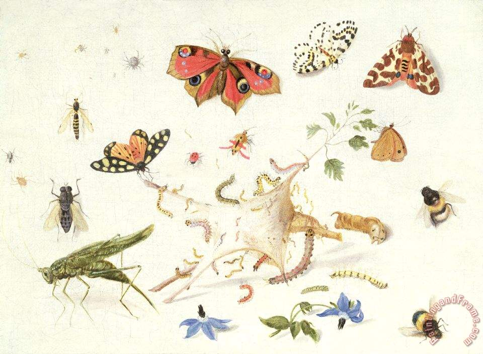 Ferdinand van Kessel Study Of Insects And Flowers Art Painting