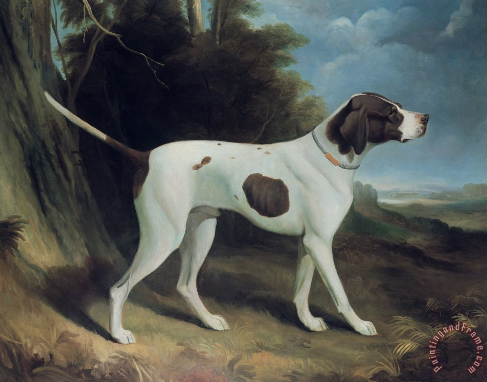 Portrait of a liver and white pointer painting - George Garrard Portrait of a liver and white pointer Art Print