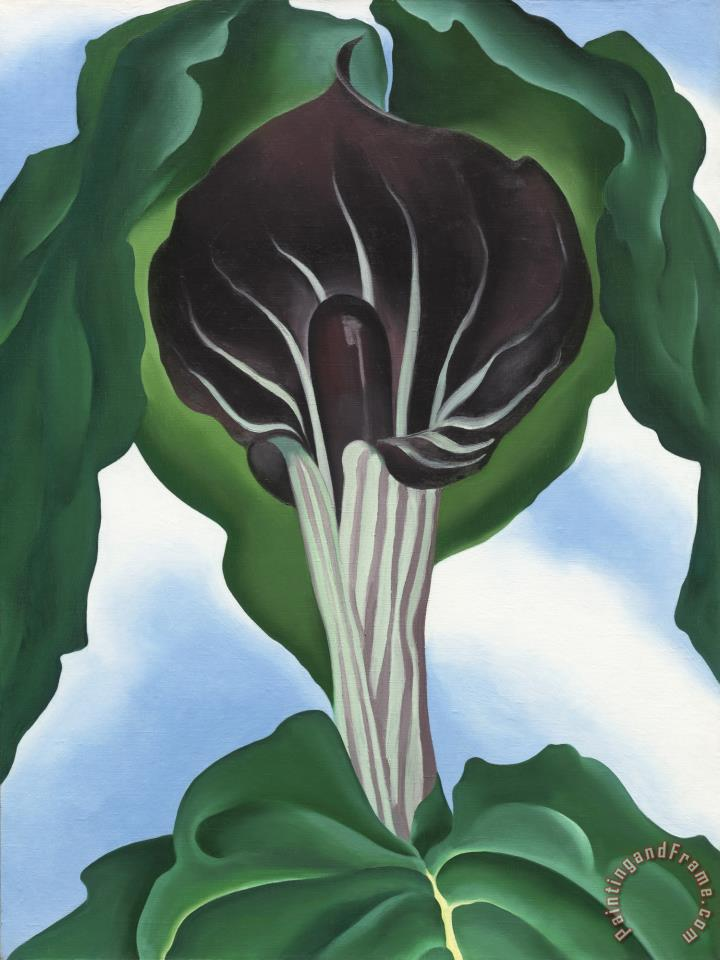 Georgia O Keeffe Jack In The Pulpit No 3 Painting Jack