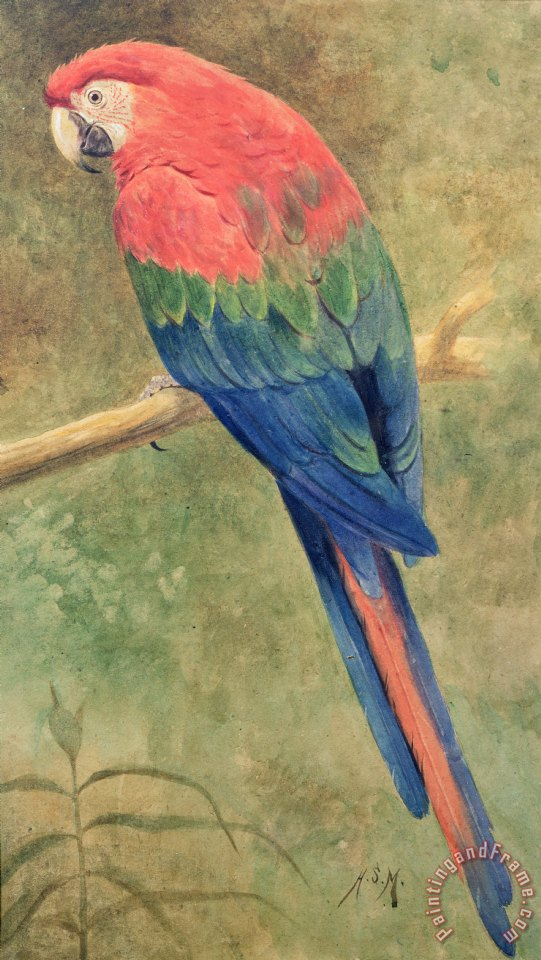Macaw Painting For Sale