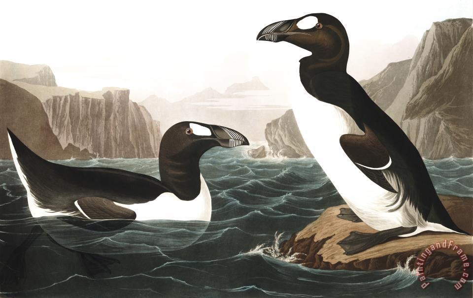 John James Audubon Great Auk Painting Great Auk Print