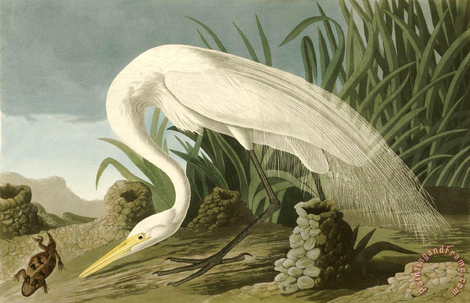 John james audubon white heron painting white heron for White heron paint